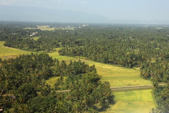 Lowland rice paddies just outside Banda Aceh.