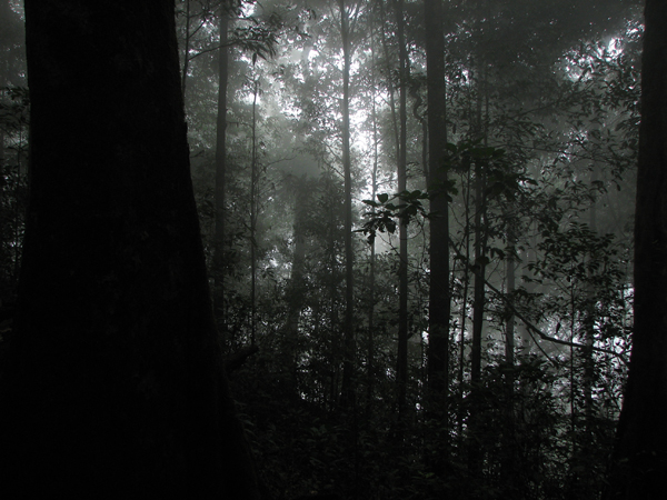 Centipede habitat: forest in Silent Valley, Kerala. Photo by: K.A. Subramanian.