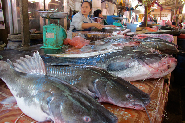 Fish market in Lao PDR: millions depend on the Mekong for food. Photo courtesy of FISHBIO.