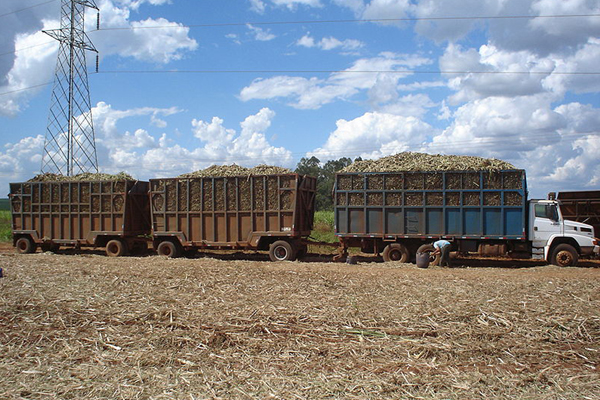 Sugarcane harvest in São Paulo state, Brazil. Photo by: Edrossini.