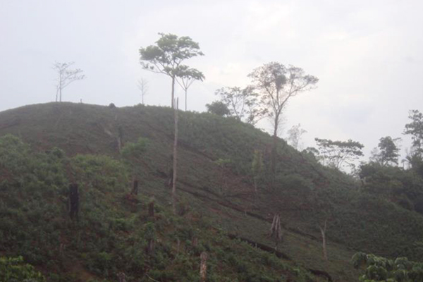 Deforestation in Bosawás Biosphere Reserve. Photo courtesy of: Independent Mayangna Nation of Nicaragua.