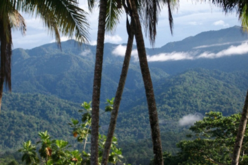 Torricelli Mountain Range in New Guinea. Photo courtesy of the Tenkile Conservation Alliance (TCA).