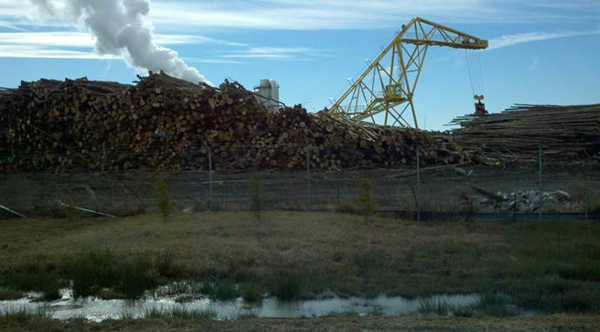 Enviva's facility in Ahoskie, North Carolina. The photograph shows that the company is using large quantities of whole tree trunks for its pellets. Photo by: Southern Environmental Law Center.