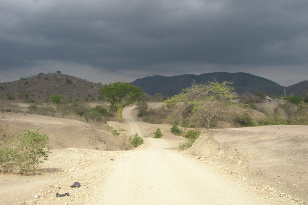 An example of ecological turnover along an altitudinal gradient in western Ecuador: vegetation is sparse in lowlands (foreground) but increases substantially at higher elevations (background). Photo by: Manuel Peralvo.