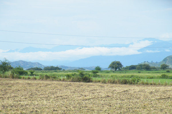 The territory of Piedras is characterised by large fields used for rice and pasture, and stretches of palm and broad-leafed forest. Photo by: Robin Llewellyn.