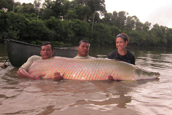 Davis Edwards, Terry Haynes and Lesley de Souza with a tagged arapaima.  Photo credit: © Shedd Aquarium/Carlson Haynes.