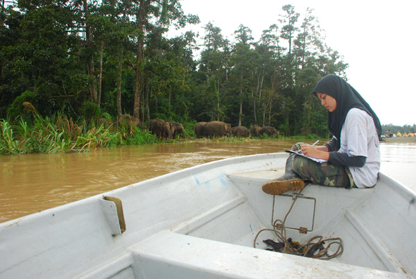 Nurzhafarina Othman tracking Bornean elephants in the Kinabatangan. Photo courtesy of: Nurzahafarina Othman.