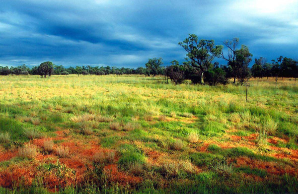 Australian tropical savanna in the storm season. Photo by: Euan Ritchie.