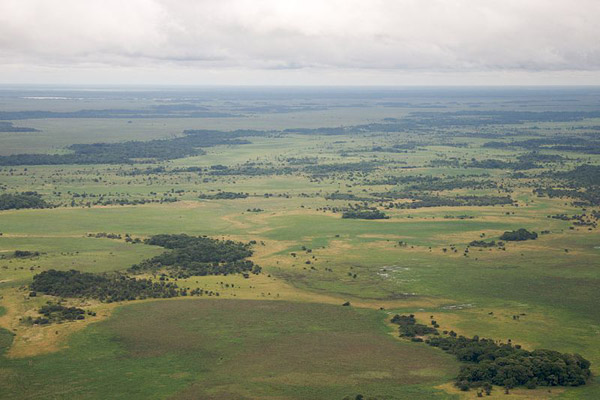 Aerial view of Llanos de Moxos. Photo by: Sam Bebee.