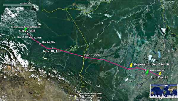 Orinoco goose migration mapped from Peru to Bolivia. Image courtesy of Lisa Davenport.
