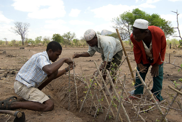 Building a living fence to mitigate human-wildlife conflict in Niassa. Photo by: Niassa Carnivore Project.
