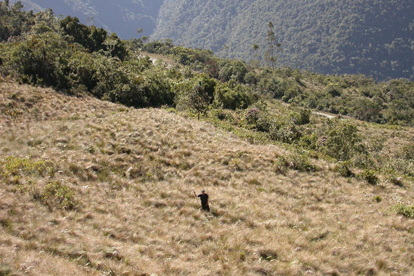 David Lutz in puna grasslands just above the treeline. Photo by: Jhon Walter Mesco.