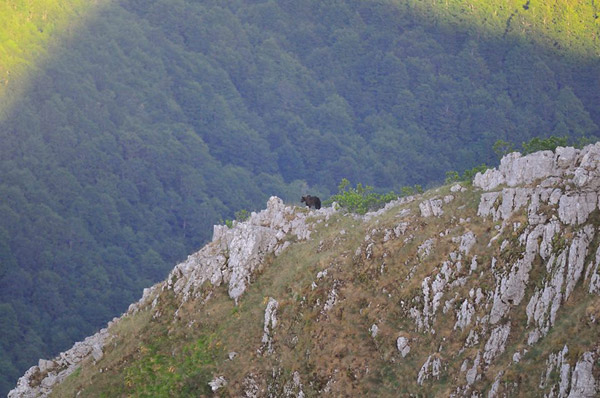 Bear in the Apennines landscape. Photo by: Massimiliano de Persiis.