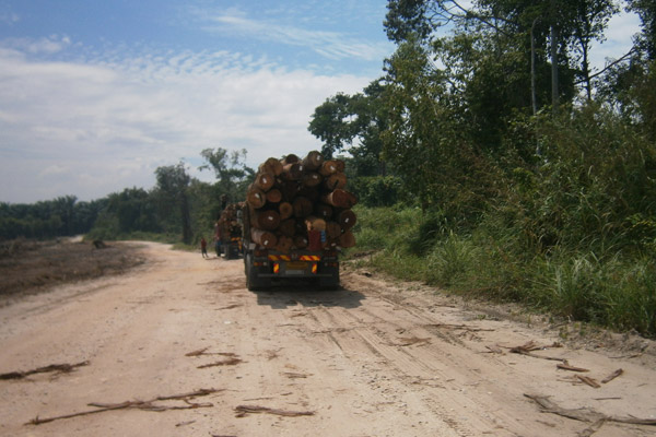 Logging truck carrying away logs from the destroyed Bikam Forest Reserve. Photo by: Meorrazak Meorabdulrahman.