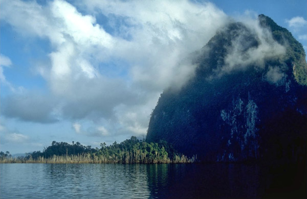 Forest islands in Chiew Larn Reservoir—such as the one in foreground of this photo—form a useful system to examine the ecological impacts of fragmentation. Surveys of these islands by Gibson and colleagues show that extinctions in forest fragments can occur much more rapidly than previously thought. Photo by: Anthony Lynam.