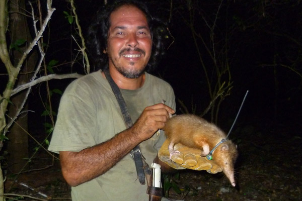 Nicolas Corona poses with solenodon after its being collared. Note the hilt of his trusty machete on the lower right. Photo by: Ros Kennerley.