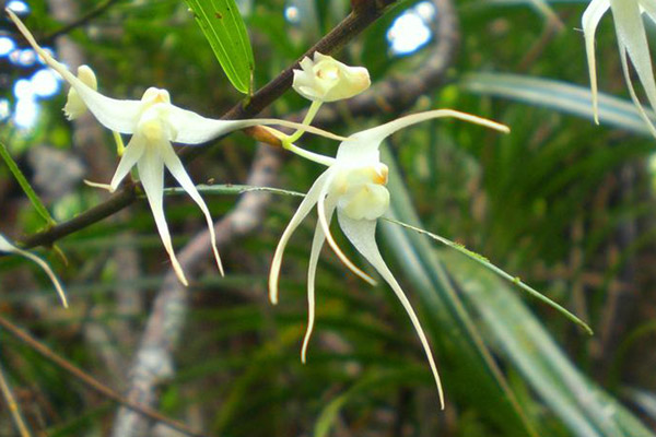 Orchids in the forests of Mount Panié. Photo by: © Conservation International/photo by François Tron.