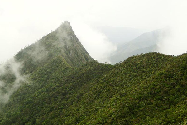 Above 800 meters the forest is often engulfed in clouds. Photo by: © Conservation International/photo by François Tron.
