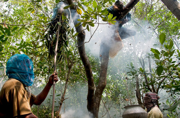 Honey collectors in the Sundarbans. Photo by: Kaiser Ahmed.