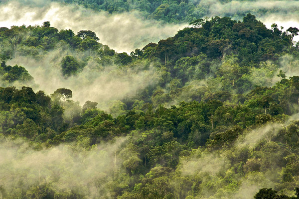 Forest canopy on the sky island of Nyungwe, Rwanda. Photo by: Michele Menegon