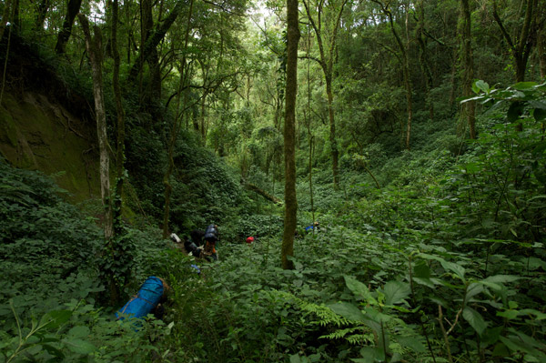 Team moving through a montane forest toward a sampling site. Photo by: Michele Menegon.