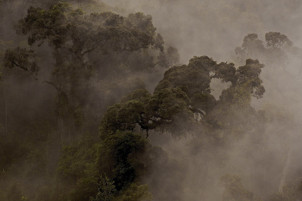 Trees in the mist in Nyungwe Forest in Uganda. Photo by: Michele Menegon.