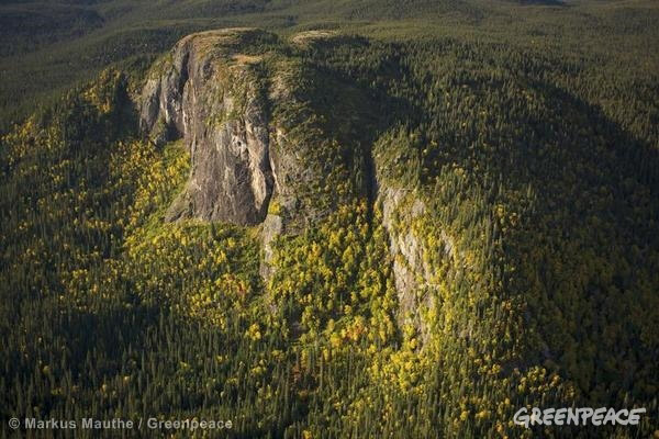 Boreal forest in Canada. Photo by: Markus Mauthe/Greenpeace.