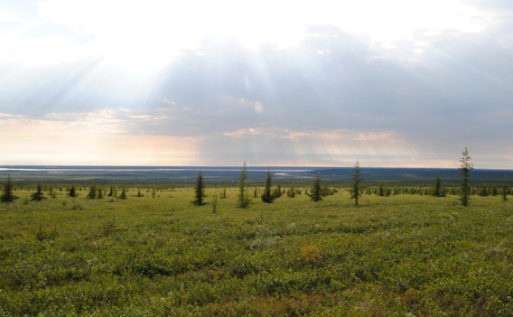 Arctic treeline site near Cherskiy in northeastern Siberia. A new study finds that the Arctic treeline will continue expanding northward as the region warms. Photo courtesy of Woods Hole Research Center.