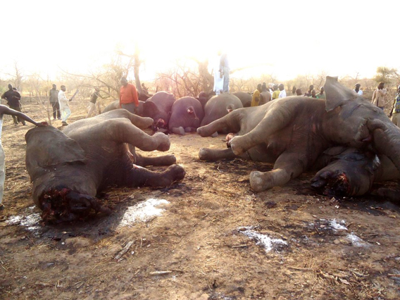 A scene of terror: the bodies of 89 elephants were found in Chad earlier in the month following a massacre by poachers. Photo courtesy of SOS Elephants in Chad.