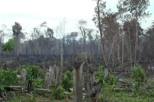 Burned forest in Bosawás buffer zone. Photo by: Christopher Jordan.