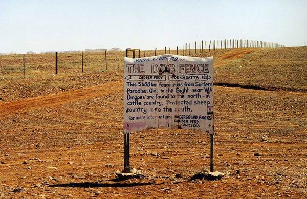 The dingo fence is one of the longest structure on the planet, stretching for 5,614 kilometers (3,488 miles).