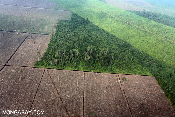 Deforestation in Riau Province, Indonesia.