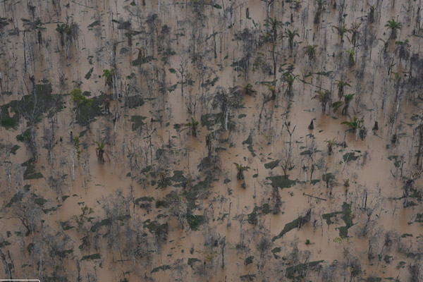 Inundated forest due to flooding. Photo by: © GREENPEACE / Lunae Parracho.