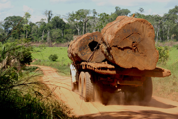 Logging on the road from the Trans-Amazon highway to Las Piedras. Photo courtesy of Paul Rosolie.