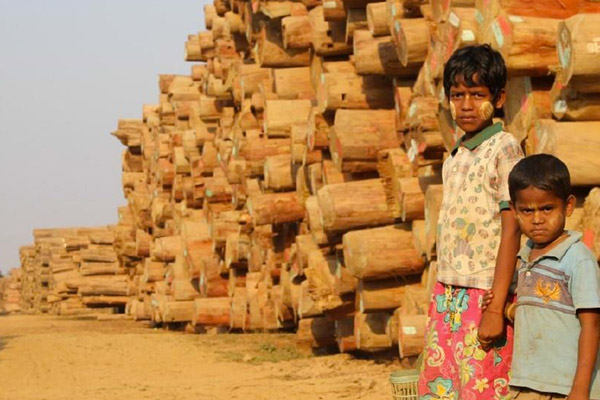 Illegal logging is rampant in Myanmar. Photo courtesy of the EIA.