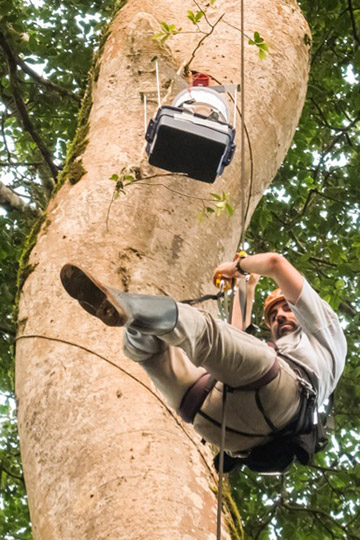 In addition to feces, scientists can also learn a lot about wildlife and their pathogens by letting mosquitoes and flies do the work for us. In the attached photo, Gillespie am descending after installing a mosquito gravid trap in the canopy at Kibale National Park in Uganda. Photo courtesy of Thomas Gillespie.