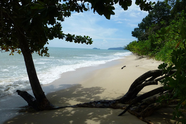 Pasir Panjang nesting beach and forest. Photo by: Nadine Ruppert.