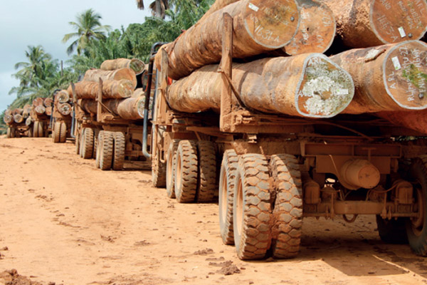 Logging trucks in Liberia. In the last two years alone, 23 killings were connected to deforestation and illegal logging. Photo by:  © Global Witness.