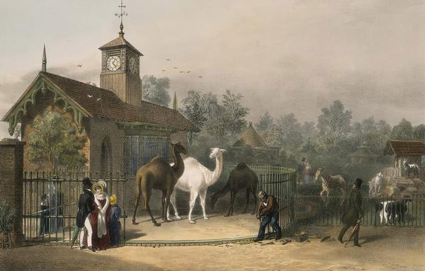 Painting of zoo in Regent's Park, London in 1835. Zoological institutions have changed considerably in the last two centuries. Painter unknown.