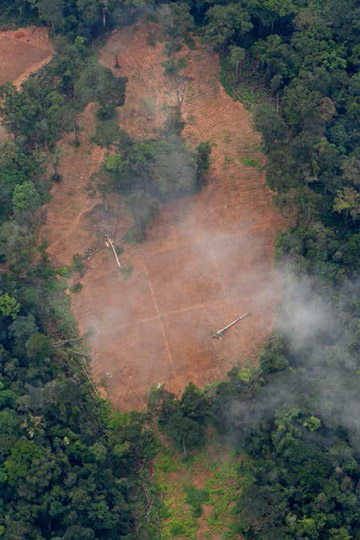 Aerial view of deforestation by Herakles Farms. Photo by: © Jan-Joseph Stok/Greenpeace.