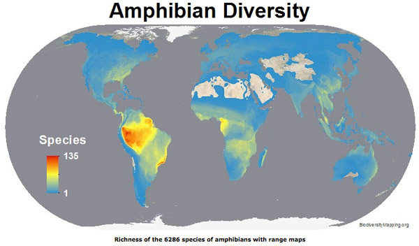 Map shows the regions with the most amphibian species. Map courtesy of Biodiversitymapping.org.