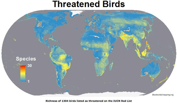 Map shows the regions with the most threatened birds. Map courtesy of Biodiversitymapping.org.