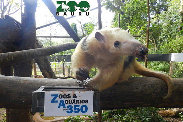 A tamandua for 350. Deforestation across Latin American threatens tamanduas and worsens global warming. Photo by: Bauru Zoo, Brazil.