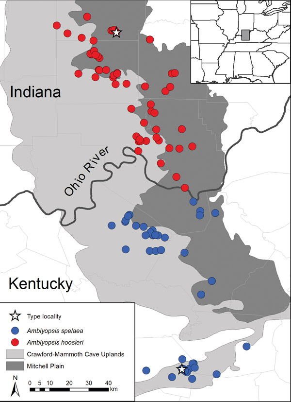 Distribution of Amblyopsis spelaea and Amblyopsis hoosieri in the Mitchell Plain and Crawford-Mammoth Uplands of Indiana and Kentucky. Image courtesy of Chakrabarty et al.