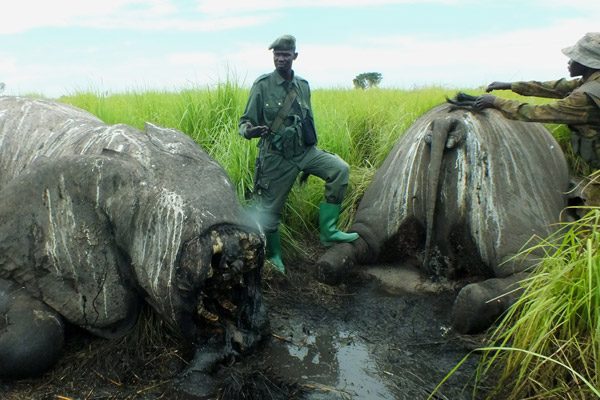 Elephants gunned down by helicopter. Photo by: African Parks.