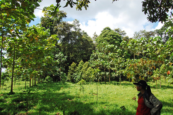 Replanting forest along the Kinabatangan. Photo by: Shernytta Poloi/HUTAN.