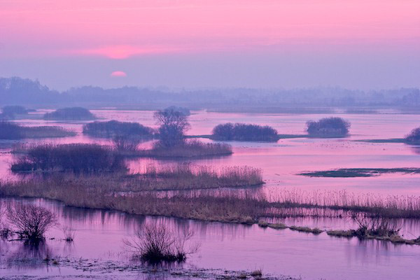 Los pantanos de Biebrza al atardecer. Estos pantanos son famosos por sus aves. Fotografía de: Lukasz Mazurek.