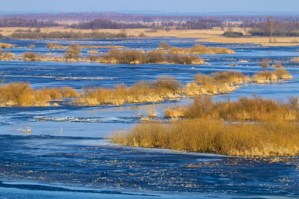 The Biebrza marshes. Photo by: Lukasz Mazurek.