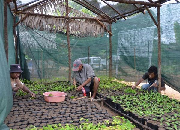 Seedling nursery. Photo courtesy of the Madagascar Biodiversity Partnership and Conservation Fusion.