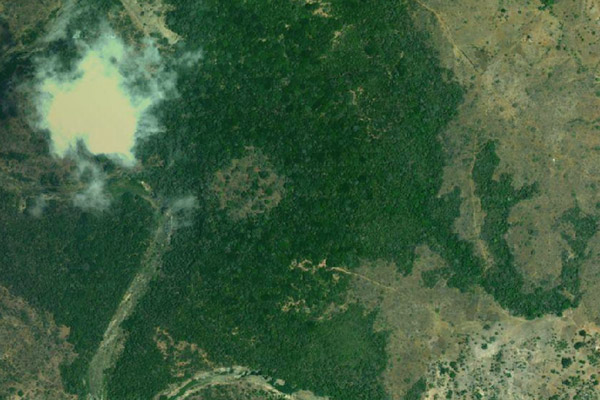 Google Earth view of the Mijikenda Kaya Forest, a sacred forest in coastal Kenya. Photo courtesy of Google Earth.